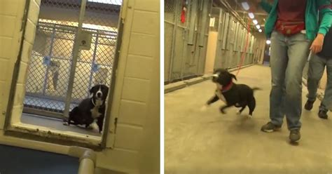 Shy Shelter Dog Can't Hold Back Emotions When He Realizes