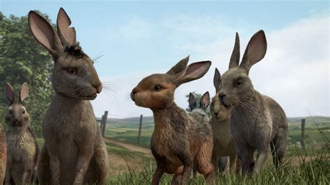Watch the brand new trailer for Watership Down - Film and