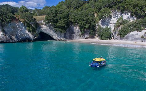 Glass Bottom Boat Whitianga   Activities and Tours in The