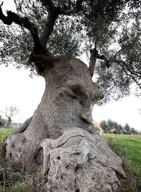 """""""The Thinking Tree"""" in Puglia, Italy : awesome"""