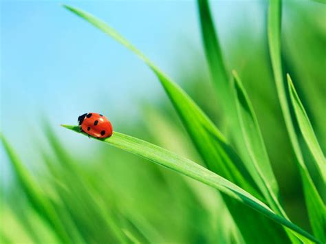 What the Origin of the Word 'Ladybug' Has to Do with
